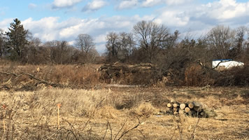 GVCO Trees down