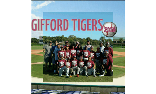 The New Gifford Tigers 2016